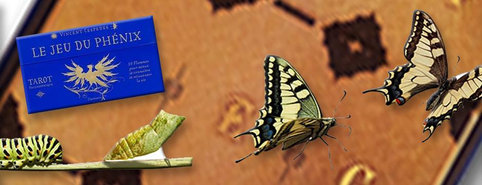 En ligne : Évoluer les pieds sur terre !